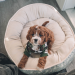 Best Fully Washable Dog Beds – 2020 Reviews